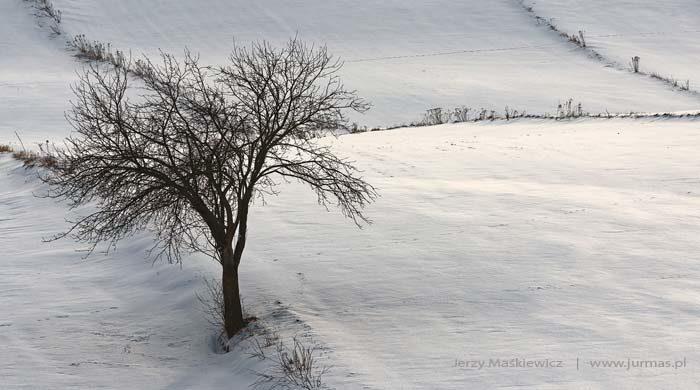 Obrazki z zimy