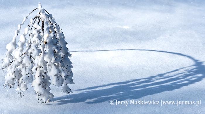 Sceny zimowe